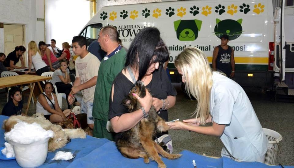 Continúan los operativos de castración y vacunación de mascotas