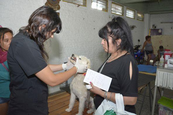 Prosiguen  los operativos de  castración gratuita  de mascotas en Longchamps