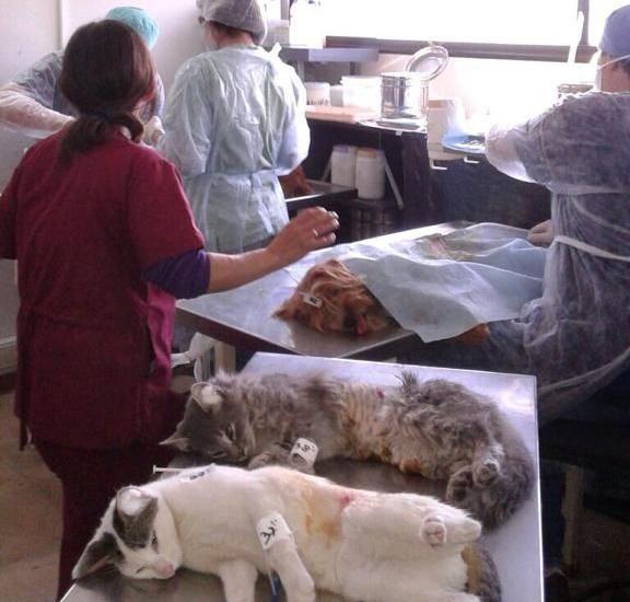 Castración gratuita de perros y gatos mañana en Longchamps
